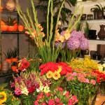Frische bunte Blumen