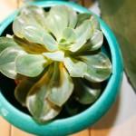 Ronkenstein-Keramik mit Pflanze