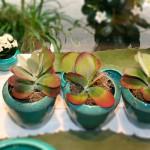 Ronkenstein-Keramiken mit Pflanzen