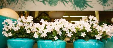 Blumenangebot